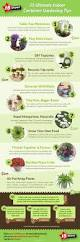 15 ultimate indoor container gardening tips infographic