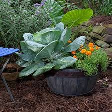 container gardening bonnie plants