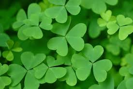 when is st patrick u0027s day in 2017 the old farmers almanac