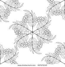 detailed ink drawing rowan rowanberry berries stock illustration