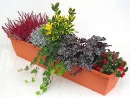 balkon grã npflanzen balkonpflanzen winterhart pflegeleicht rheumri