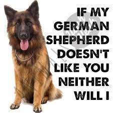 australian shepherd quotes 9162 best german shepherds images on pinterest german