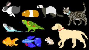 pets dog cat rabbit fish birds hamster u0026 more the kids