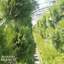 tree nursery central massachusetts ma perreault nursery bower