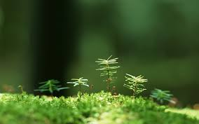grass with tiny trees free desktop wallpapers for widescreen hd