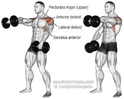 Muscles Used When Bench Pressing Alternating Dumbbell Front Raise Main Muscles Worked Anterior