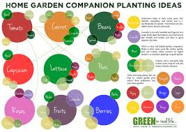 Companion Planting Garden Layout Green In Real Ideas For The Home Garden Companion Planting
