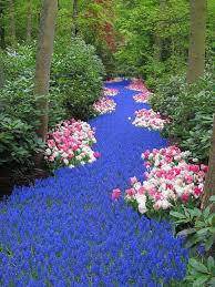 29 best river of flowers images on pinterest gardening