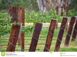 row of vines u0026 trellis posts stock photos image 8615013