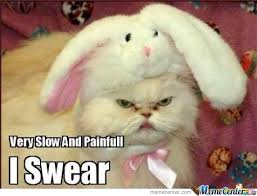 Meme Angry Cat - angry cat is angry by garganransis meme center