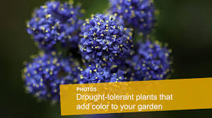 plants native to louisiana drought tolerant plants that will look great in your garden la