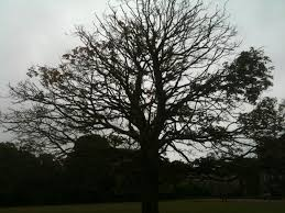 rot iron tree guard removal tree health care arbtalk the
