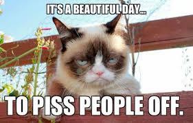 Grumpy Cat Friday Meme - chuck s fun page 2 grumpy cat still lives 24 images