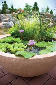 Mini Water Garden Ideas Watergarden Plants Water Garden Plants Best Choices For Small