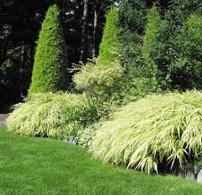 21 best grass forb images on grasses california