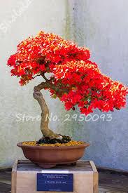 indoor plant 120 pcs lot exotic azalea seeds red flower seeds