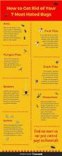 best 25 get rid of ants ideas on pinterest killing house flies