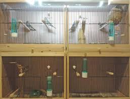 uv light for birds managing exposure bird lighting