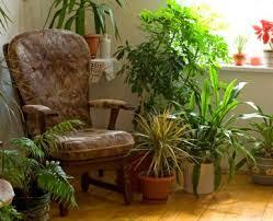 apartment plants how to start an apartment garden lovetoknow
