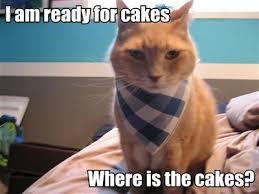 Diabetes Cat Meme - happy birthday aoife diabetes uk