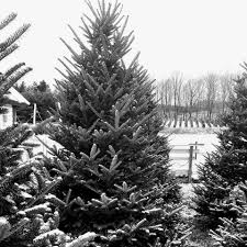 snowshoe valley christmas tree farm home facebook