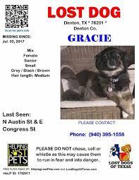affenpinscher in texas lost dogs in gainesville tx lost my doggie