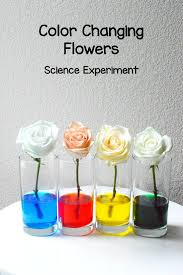 best 25 science experiments for toddlers ideas on pinterest