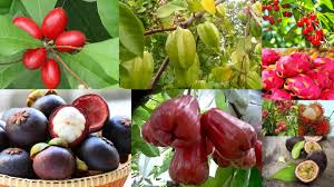 blog exotic fruit plants easily found in india chhajedgarden com