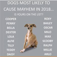 Dog Doctor Meme - dog memes home facebook