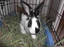 bunny foundation urgent