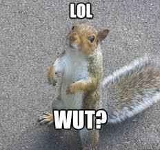 Lol Wut Meme - lol wut squirrel quickmeme