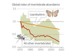 How Many Years In A Light Year What U0027s Causing The Sharp Decline In Insects And Why It Matters