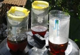 Gardening Tips For Summer - shop scissors blog 3 tips for summer gardening