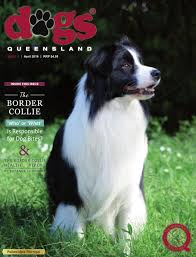 belgian shepherd qld dogs queensland the queensland dog world issue 4 april