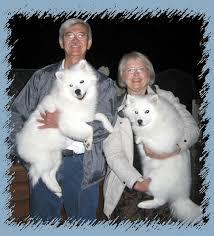 american eskimo dog forum kiva american eskimo dogs info page