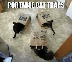 Cat Trap Meme - portable cat traps meme on me me