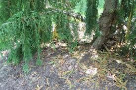what now brown evergreen garden housecalls