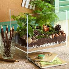 how to combine terrarium plants