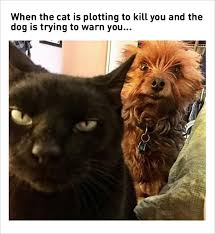 Cat And Dog Memes - the chaos world when you are living with both cats and dogs dog