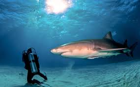 shark feeding good or bad dive in online scuba magazine