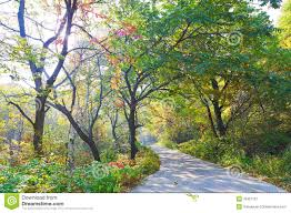 the pretty trees autumnal scenery stock image image 35367131