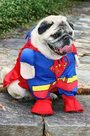 pin by pugs lover t shirt store on pugs in costumes pinterest