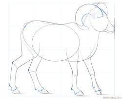 how to draw a bighorn sheep step by step drawing tutorials