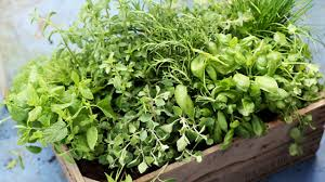 how to grow 5 easy herbs bees will love friends of the earth