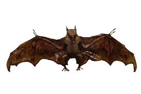 bat removal wildlife removal services of south florida