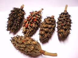 magnolia seed pods dried flower plant material 12 christmas