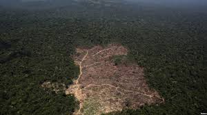 brazil tops places to for deforestation satellites show