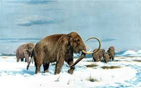 mammoth fragments raise cloning hopes telegraph