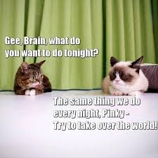 Lil Bub Meme - lil bub and tardar sauce as pinky the brain meme guy