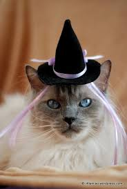 White Cat Halloween Costume 108 Costume Cat Images Animals Kitty Cats